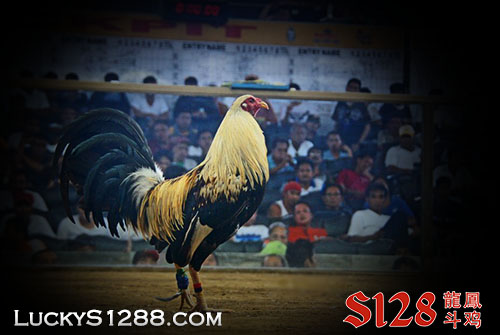 Sabung Ayam Pw Live Streaming S128